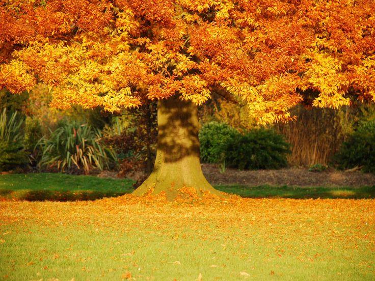Еще одно дерево, осенью