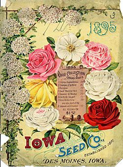 Catalog Information    Company Name:  Iowa Seed Co.    Catalog Title:  1895 Rose Collection (1895)  Publication Information:  Des Moines, IO  United States  Category(ies) of Cover Art:  Roses