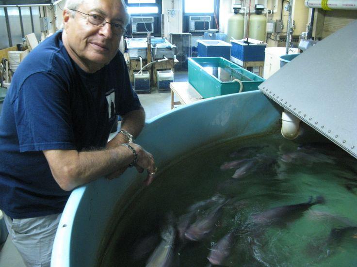 Urban Fish Farming: Wave Of The Future?