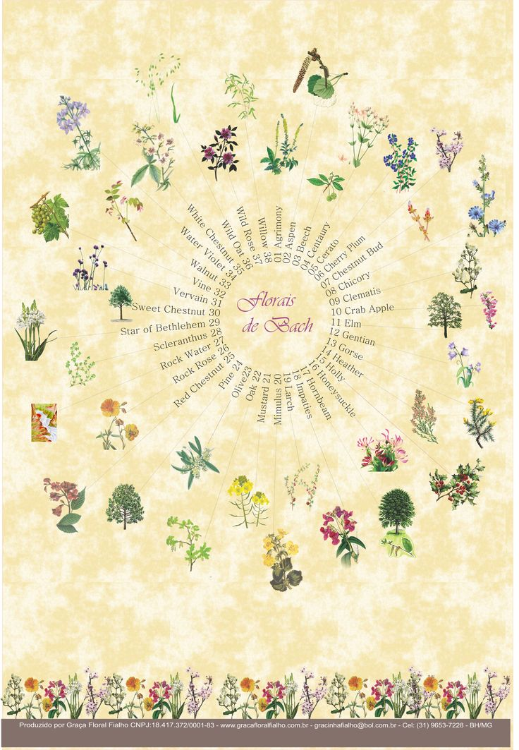 Poster Florais de Bach - formato A3 - papel couchê 210gr