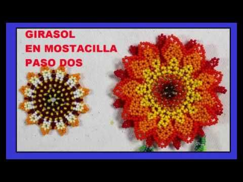 GIRASOL EN MOSTACILLA//5 VIDEOS - YouTube