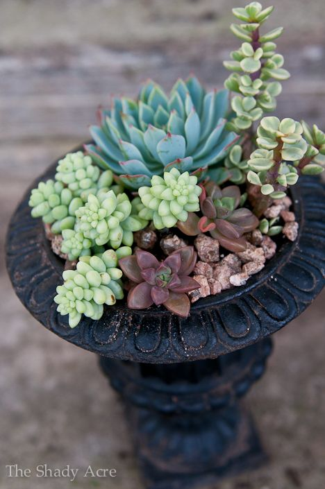 planting succulents in urns... not sure I like the urn concept but the plants are beautiful :D