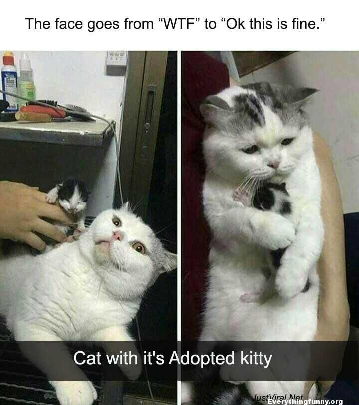 Everything Funny Updated Hourly Thousands Of Funny Pictures Funny Text Messages Funny Memes Quotes And More Cat Memes Cat Quotes Funny Funny Cat Memes