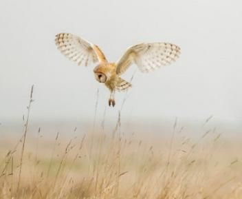 Watch: Mother Owl Takes On Snake—and Wins