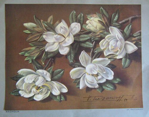 Oils - Tretchikoff Magnolia. Signed print for sale in Johannesburg (ID:207727622)