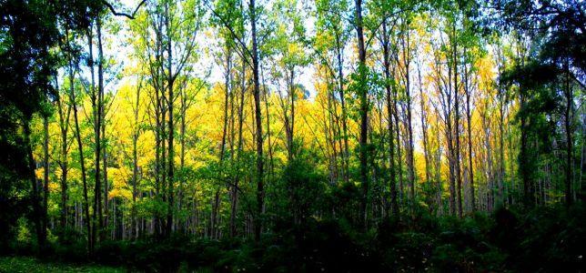 Parks Victoria - RJ Hamer Arboretum