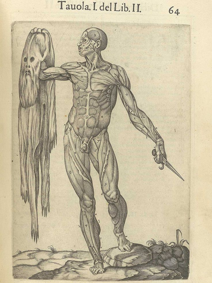 Page 64 of Juan Valverde de Amusco's Anatomia del corpo humano, 1560 featuring a flayed cadaver holds his skin in his right hand and a dissecting knife in the other. From the collection of the National Library of Medicine. Visit: http://www.nlm.nih.gov/exhibition/historicalanatomies/valverde_home.html
