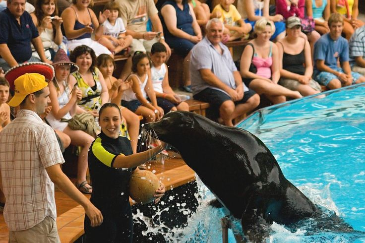 Лоро парк: шоу морских котиков