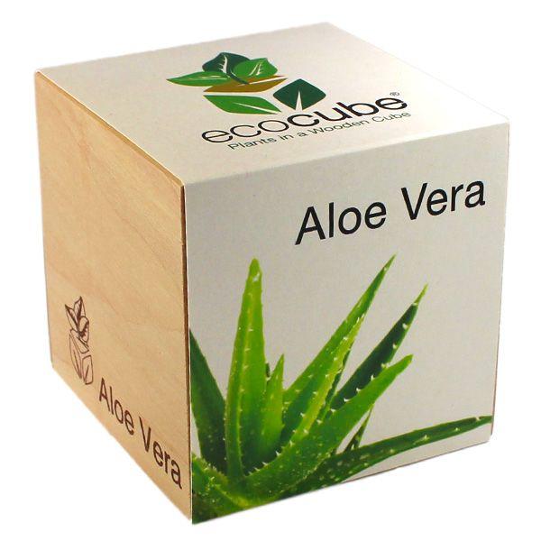Les 18 meilleures images du tableau ecocube petite plante sur pinterest graines plantes et - Culture de l aloe vera ...