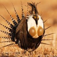 'Bubble Pop' Bird May Be Rarest -- And Most at Risk : DNews