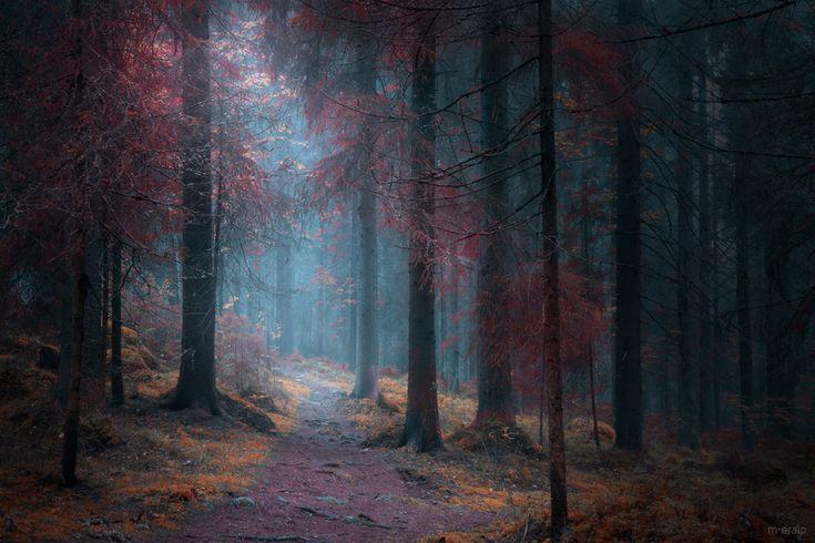 Dark forest by m-eralp