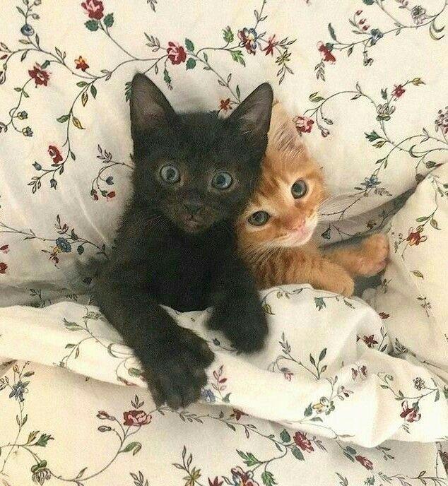 Animal Cute Cats Cute Baby Animals Kittens Cutest