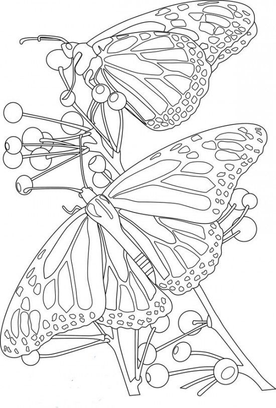 Colouring Pages Of Flowers And Butterflies : 273 best coloring butterflies images on pinterest