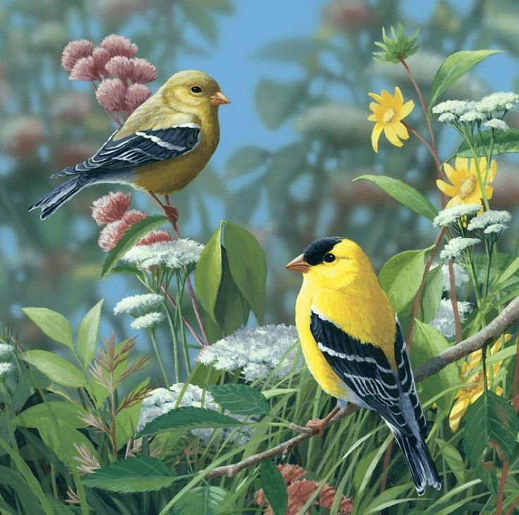 открытки лесные птицы красивое высшей степени