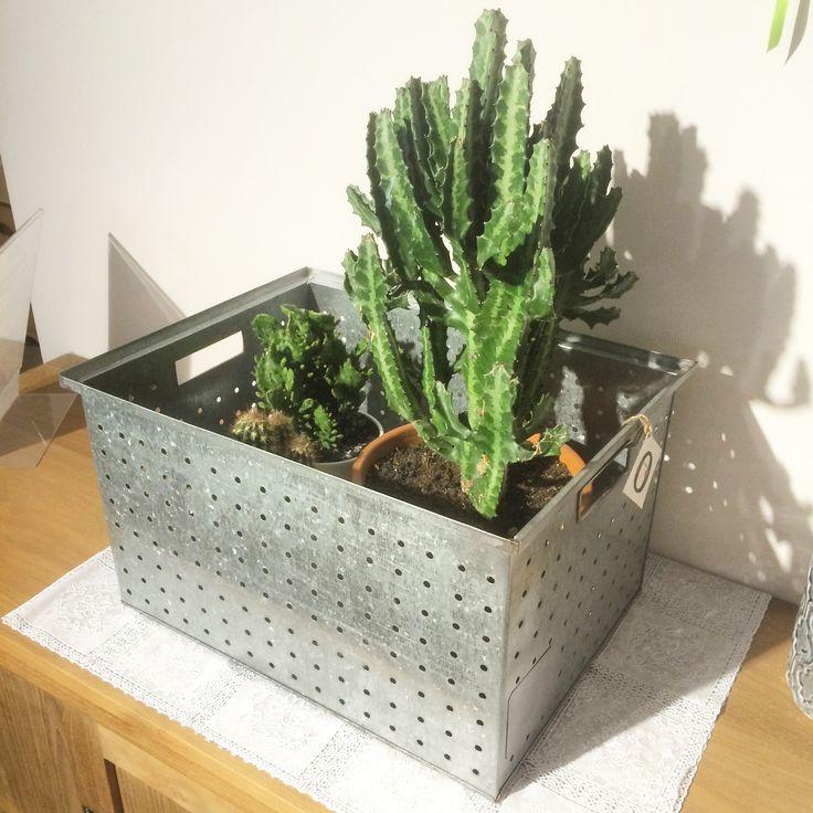 Geef je huis een stoere, industriële look met deze prachtige cactussen en metalen opbergboxen