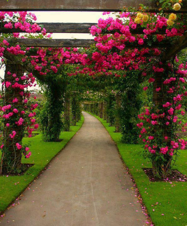 curtains and fountains of roses - surreal- what I picture as the path to heaven's door, you have to keep moving toward it, the beauty is to great to deny
