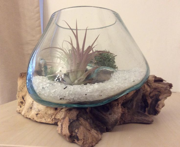 Blown glass onto driftwood base containing air plants and decorative stones.