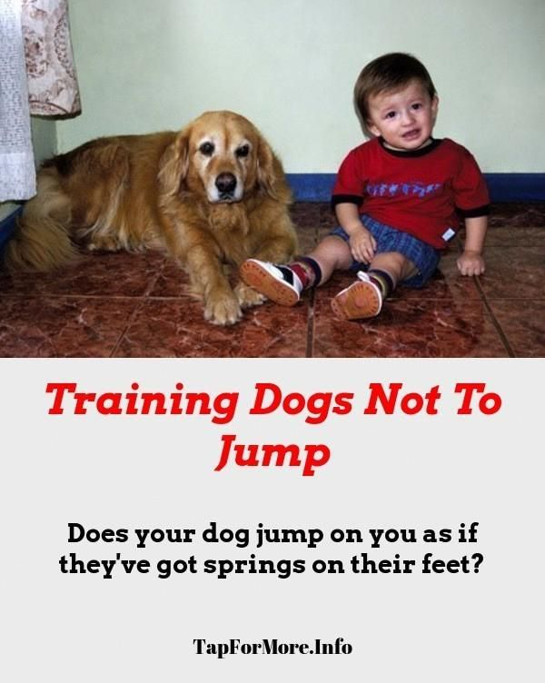 Stop Dog Jumping And How To Calm Down A Dog Check Pin For