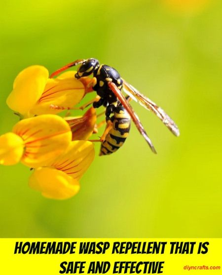 Homemade Wasp Repellent That is Safe and Effective with PEPPERMINT OIL & bonus how to make a wasp trap.