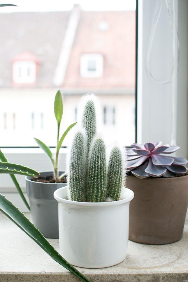 Cacti U0026 Succulents On Windowsill