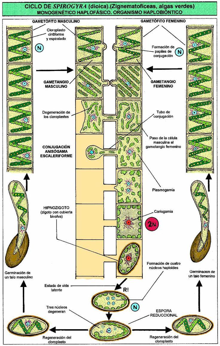 Biology - Wikipedia