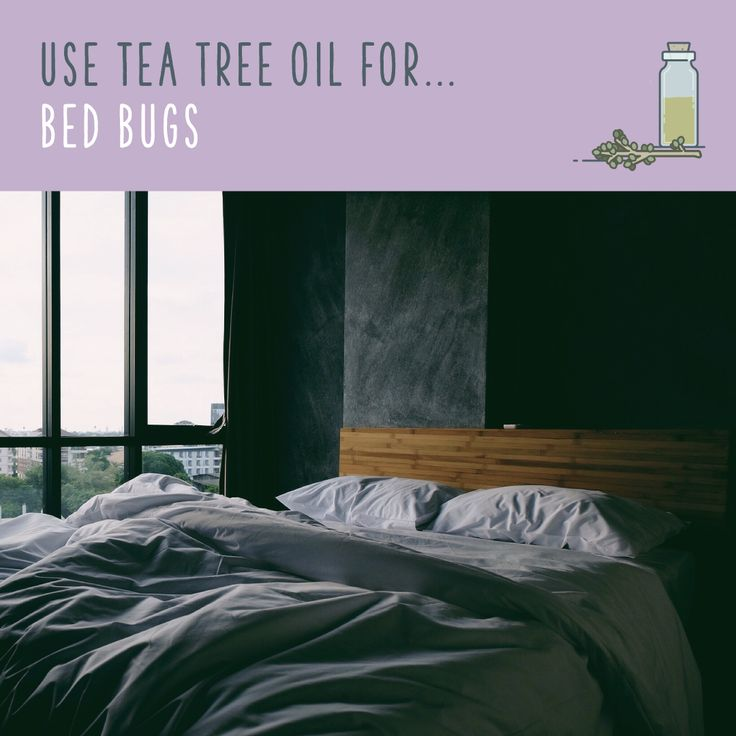 Tea Tree Oil For Bed Bugs  On its own, tea tree oil isn't effective against a bad bed bug infestation. But in conjunction with other pest control methods, like diatomaceous earth and routine washing and vacuuming, it can help keep bed bugs at bay. Mix a 2% solution of tea tree oil, lavender oil, and lukewarm water, put it in a spray bottle, and spray down your furniture and carpets. The strong scent may keep those bugs away!