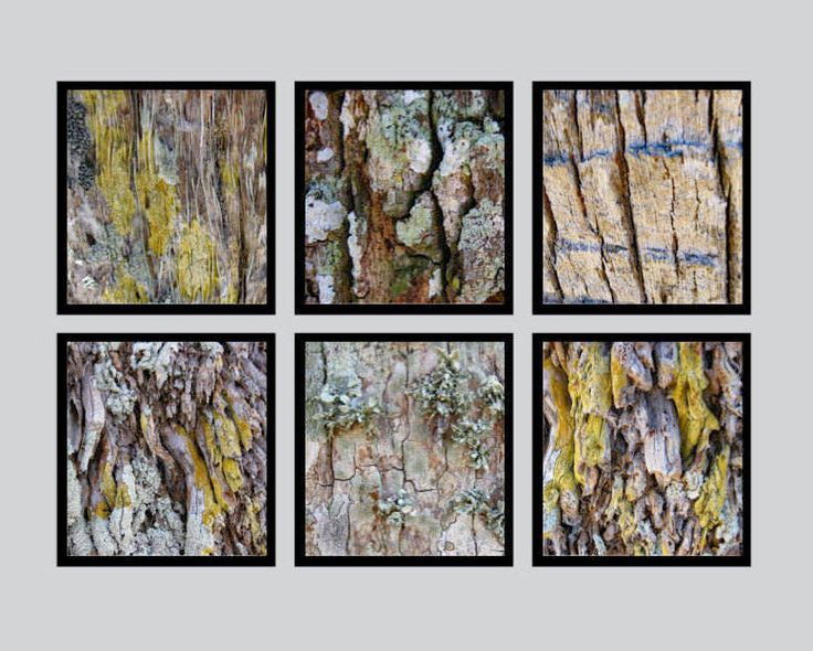 """Wall Grouping of Six 12"""" x 12"""" Abstract Tree Bark Designed Art Prints. Easy to frame. Add Warmth & Sophistication to Your Decor. Office Art. by VintageArtForLiving on Etsy https://www.etsy.com/listing/550371005/wall-grouping-of-six-12-x-12-abstract"""