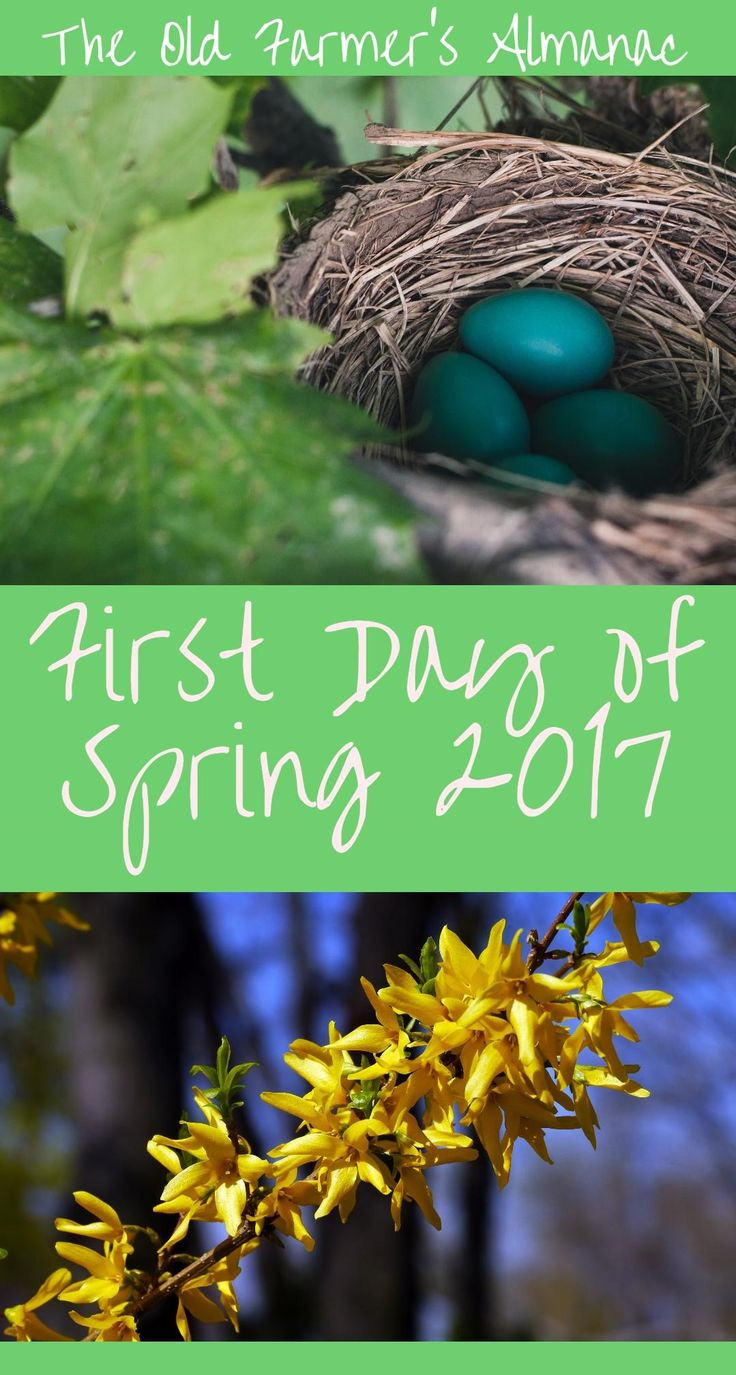 The Vernal Equinox is coming! Learn about the First Day of Spring from Almanac.com.