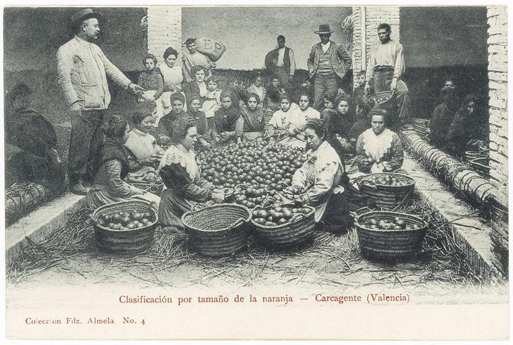 Clasificacion por tamaño de la naranja : Carcagente (Valencia). (1905 a. de) - Anónimo