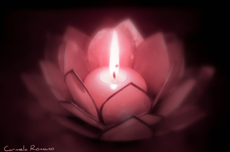 Pink Lotus Candles And Candlelight Candles Pinterest