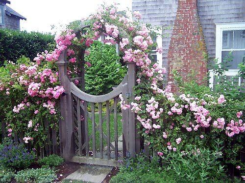 Garden Gates Captivate: Gardens Ideas, Gardens Fence, Secret Gardens, White Rose, Climbing Rose, Side Yard, Gardens Gates, Pink Rose, Home Parties