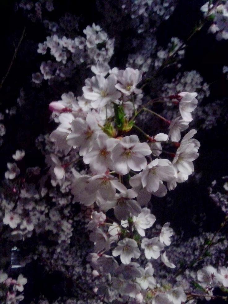 Cratalis / Autorenblog von Herbert Blaser: Nachtblütenschnee