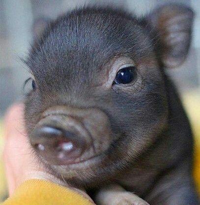 An adorable non-pink piggy...