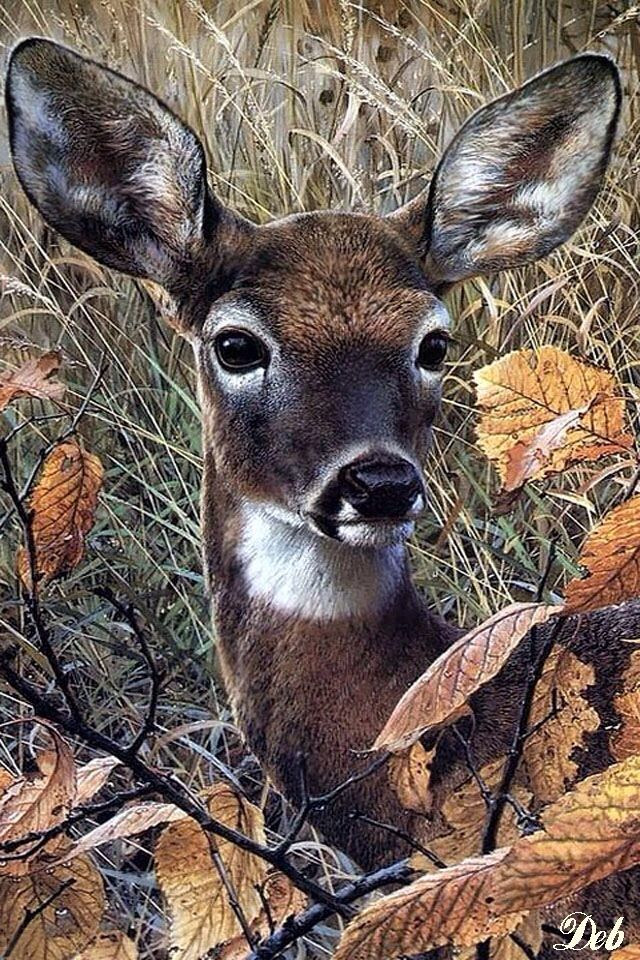 AUTUMN / FALL DEER, IPHONE WALLPAPER BACKGROUND