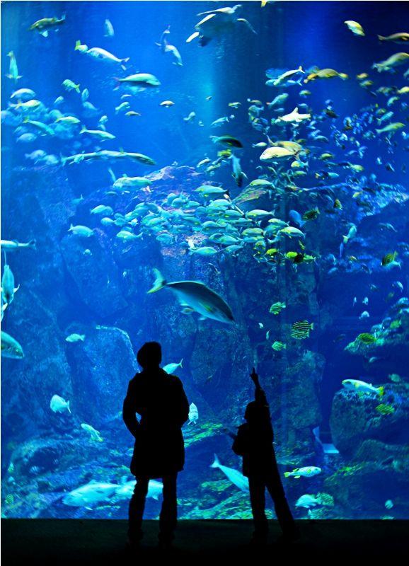 水族館 : るたお水族館