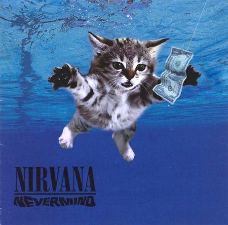 Nirvana Kitty: Cat Cobain, Album Covers, Cats, Nirvana, Funny, Kittens, Kitty, Animal