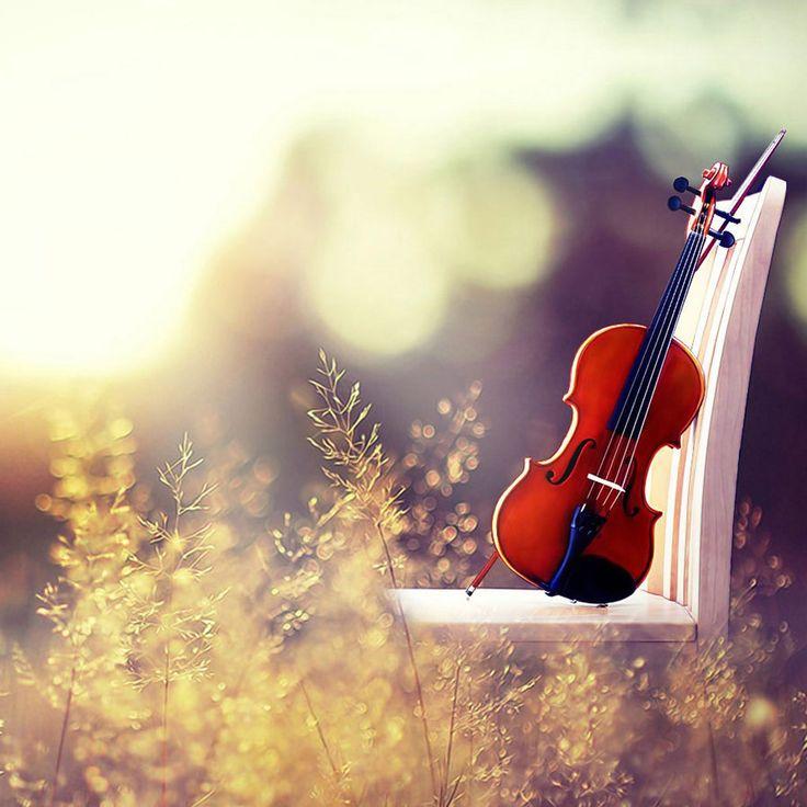 276 Best Violins Images On Pinterest