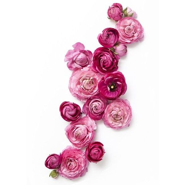 c09c68b06f5e36d24939c42eeb7bd5f6.jpg (564×789) ❤ liked on Polyvore featuring filler, backgrounds and floral