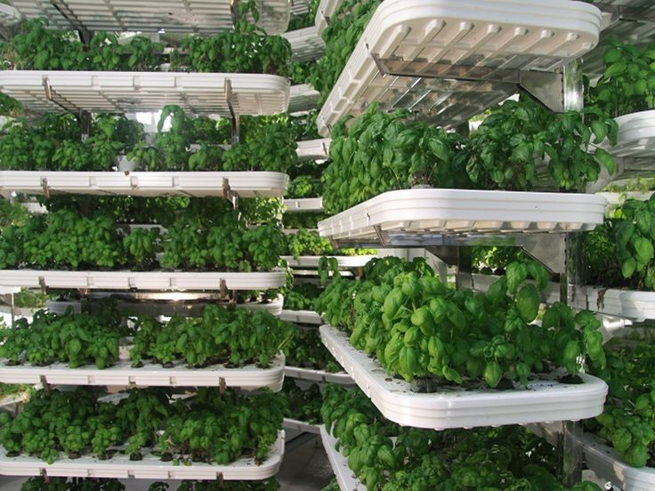 54 best hydroponic images on pinterest | plants, gardening and ... - Der Vertikale Garten Live Screen Danielle Trofe