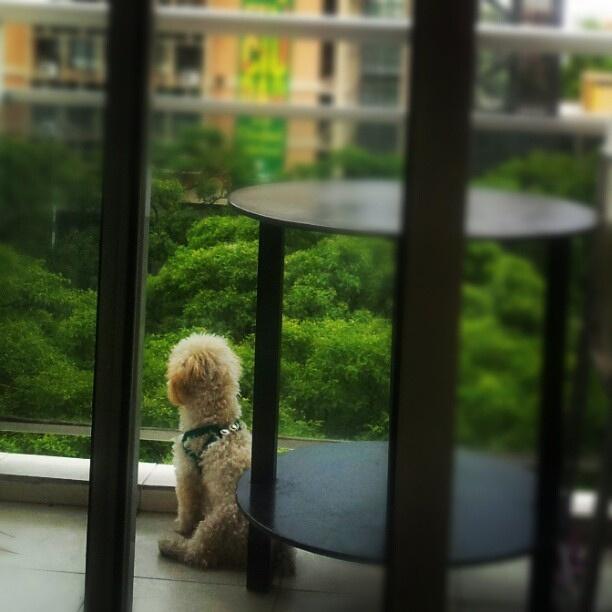 mirando por el balcón!, via Flickr.