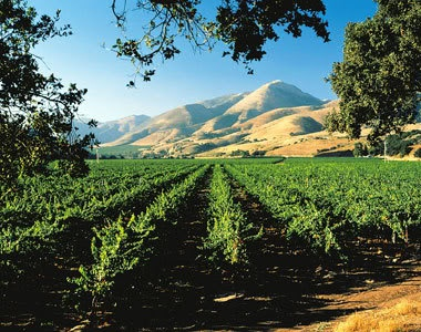 Santa Ynez Valley Wine country, California!  Peacefully gorgeous, and great wine, too!  @BethVivalaVoice