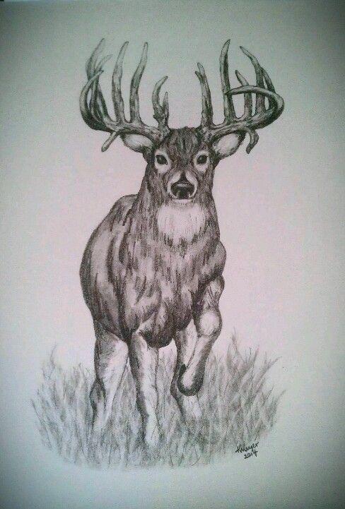 76 Best Images About Trophy Bucks On Pinterest Deer