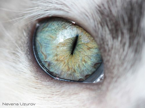 Cat's eye by Nevena Uzurov