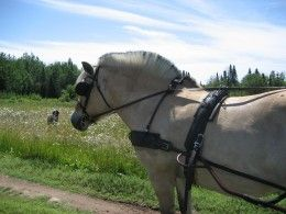 Horse Training Tips - Your Voice