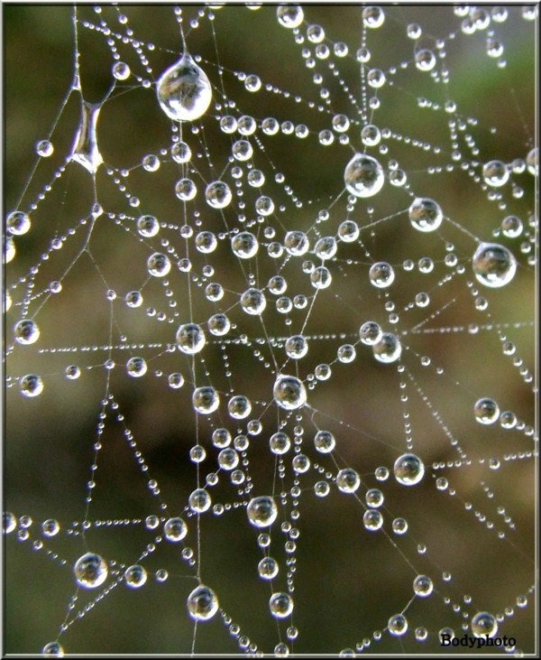drops on web - do you see the pentacle in the lower left?