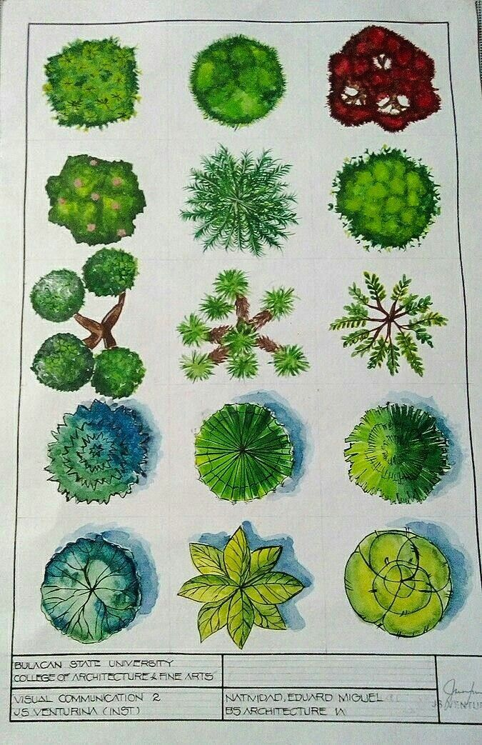 Entourage Aquarell Baume Render Prang Plan Aquarell Baume Entourage Plan Prang Render Shrubs For Landscaping Garden Design Plans Garden Design