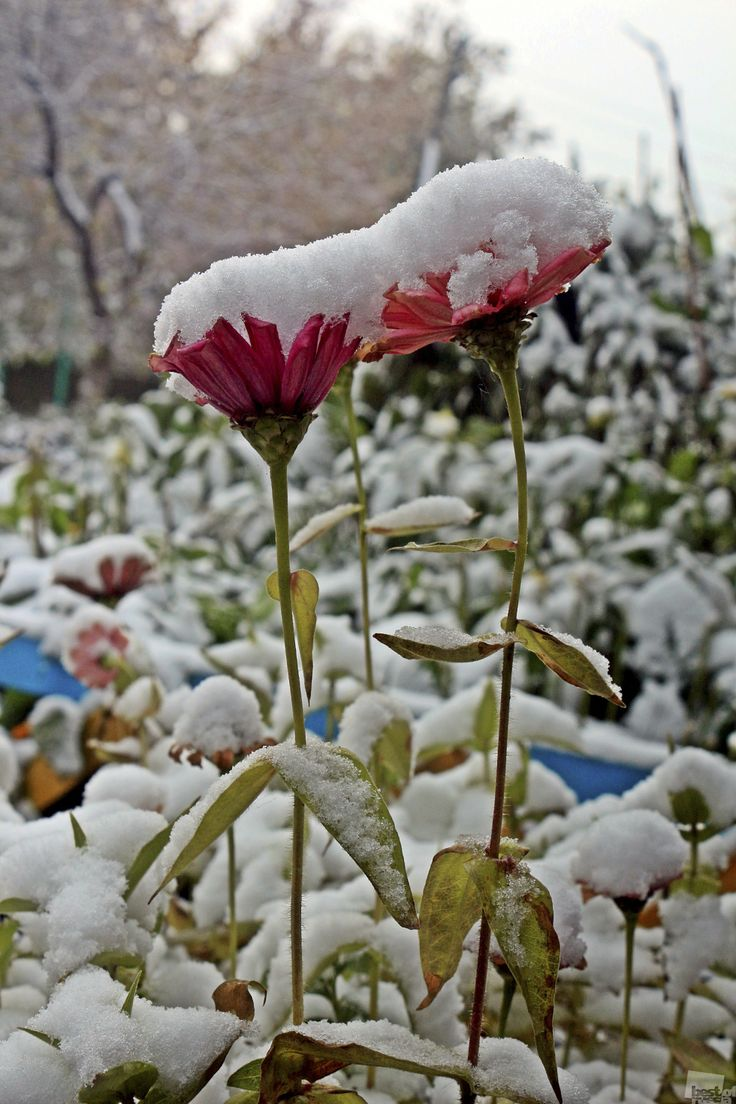 First snow in Chelyabinsk city of Russia.
