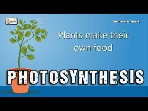 ▶ Photosynthesis | Photosynthesis in plants | Photosynthesis - Biology basics for children | elearnin - YouTube