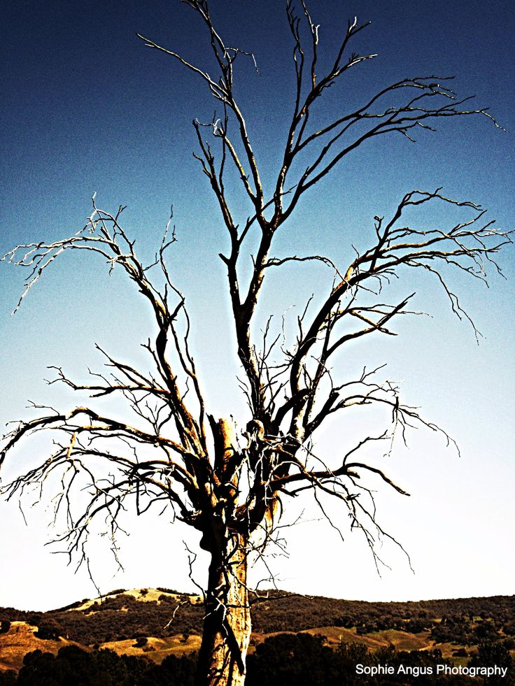 Tree Skeleton, Tumut, New South Wales - Sophie Angus Photography
