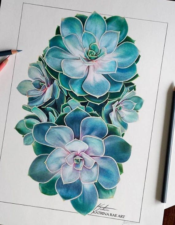Just listed this piece! Colored pencil succulent illustration on paper. . .